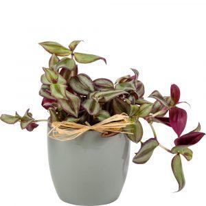 Florist Sundries and Craft Supplies - Dove Grey Oxford Ceramic Plant Pot