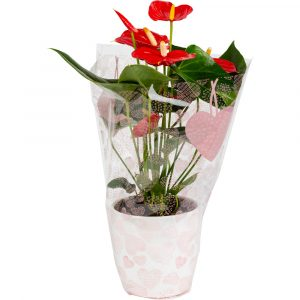 Florist Sundries and Craft Supplies - Heart of Hearts Cello Wrap Bouquet Sleeve